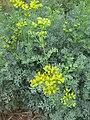 Gardenology.org-IMG 2720 rbgs11jan.jpg