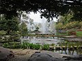 Gardenology.org-IMG 7372 qsbg11mar.jpg