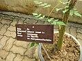 Gardenology.org-IMG 7973 qsbg11mar.jpg