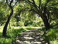 Garland Ranch Regional Park - Carmel Valley, CA - DSC06898.JPG