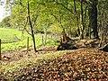 Garston Wood Dorset - geograph.org.uk - 270496.jpg