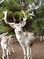 Gaziantep Zoo 1260129.jpg