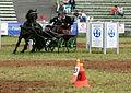 Gebrauchsprüfungen für Fahrpferde Pferd International 2011.JPG