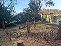 Gefällte Bäume im Humboldthain.jpg