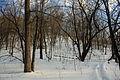 Gfp-minnesota-john-a-latsch-state-park-steep-hiking-trail.jpg