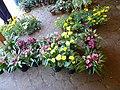 Giardino di Ninfa 104.jpg