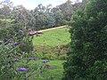 Gipsy Point VIC 3891, Australia - panoramio (1).jpg