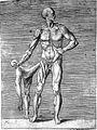 Giulio Bonasone's figures illustrating human anatomy Wellcome L0018657.jpg