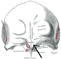 Glabella on ta a body parts diagram