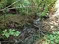 Graniczny Potok (dopływ Trzebinki), Góry Opawskie 2020.09.08 02.jpg