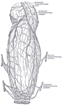 Anastomosis - Wikipedia, the free