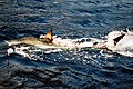 Great white shark 100.JPG