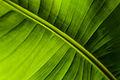 Green (3830172603).jpg