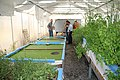 Green Age Aquaponics - Armenia 01.jpg