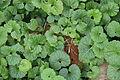 Green Plants.JPG