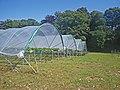 Greenhouses at Charleton Farms - geograph.org.uk - 1426623.jpg
