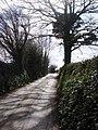 Greenway Road near Hook Bottom - geograph.org.uk - 368884.jpg