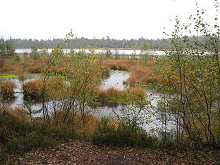 Grundloses Moor nature reserve in Lower Saxony, Germany