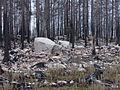 Hälleskogsbrännan besöksplats 2015 6.JPG