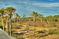 HDR Palms at Spruce Creek Park - panoramio.jpg