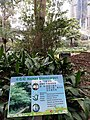 HK 中環 Central 遮打花園 Chater Garden flora green leaves n trees March 2020 SS2 63.jpg