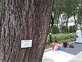 HK CWB 銅鑼灣 Causeway Bay 維多利亞公園 Victoria Park tree trunk n green leaves December 2019 SS2 03.jpg