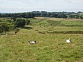 Hadrian's Wall National Trail, near Birdoswald - geograph.org.uk - 552093.jpg