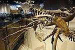 Hagryphus giganteus trunk detail salt lake city.jpg