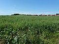 Hamel, dans la campagne (2).jpg