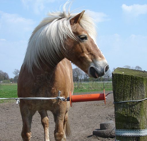 How To Install A Cheap Electric Horse Fence A Step By