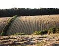 Harvested fields, Kennels Road, Hillhead direction - geograph.org.uk - 962871.jpg