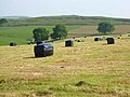 Haybales at Damgate - geograph.org.uk - 198577.jpg