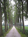 Hazerswoude - Laantje met bomen.jpg