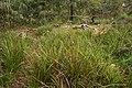 Heathy woodland at Bradshaw.jpg