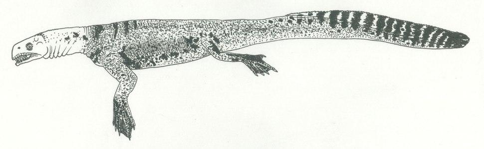 Helveticosaurus Naish