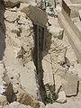 Herod IMG 0593.JPG