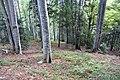 Hike to Mont Saint-Eynard (48847401306).jpg