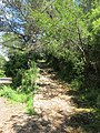 Hiking path on Palmaria island (Liguria, Italy).jpg