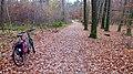 Hildener Stadtwald. Reader-9.jpg