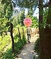 Himachal pradesh1.jpg