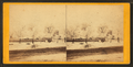 Hoar frost, as seen in a fog, Salt Lake City, from Robert N. Dennis collection of stereoscopic views.png