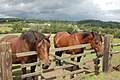 Horses at Pockerley Manor - geograph.org.uk - 1395556.jpg