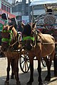 Horses with Carriage at Agrabad (04).jpg