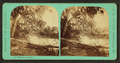 House of the parasite, from Robert N. Dennis collection of stereoscopic views.png