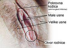 Klitotis