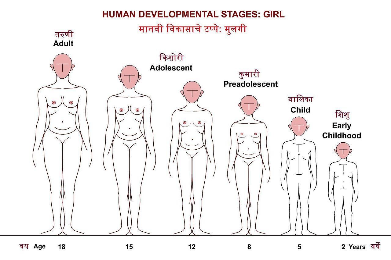 breast development human