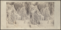 Ice tree, Trenton, New York, by Stacy, G. (George).png