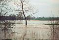 Ilm Hochwasser.jpg