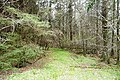 In Glencar woodland - geograph.org.uk - 778270.jpg
