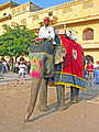 India-6595 - Flickr - archer10 (Dennis).jpg